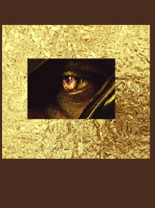 yeux doré